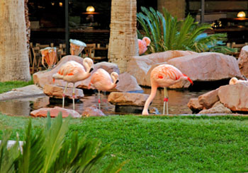 Flamingo Las Vegas hotel slideshow image 3